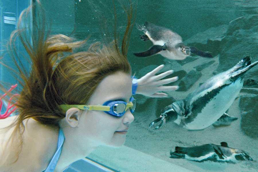 Hotel Nah  Berlin Mit Schwimmbad